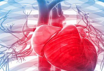 تأثیرفلاوونوئیدهای اپی کاتچین و کوئرستین بر سلامت قلب و عروق
