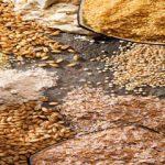 برنج قهوه ای یا غلات کامل خطر ابتلا به دیابت را کاهش می دهد