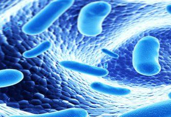 پروبیوتیک ها و بهبود یادگیری و حافظه در مبتلایان به آلزایمر