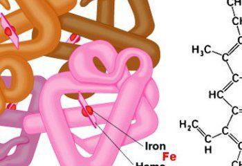 ژنتیک و تاثیر آن بر سوخت و ساز