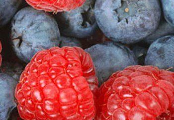 با مصرف تمشک و توت از ابتلا به دیابت پیشگیری کنیم