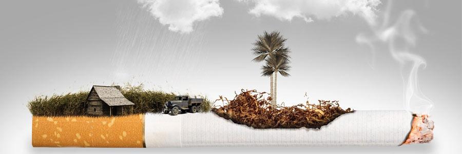 سیگار خطر بیماری قلبی و مرگ زود هنگام را افزایش میدهد.