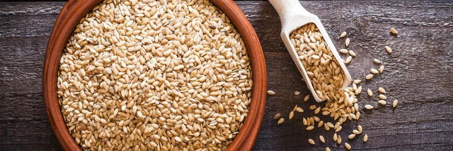 دانه بزرک احتمال ابتلا به چاقی را کاهش می دهد